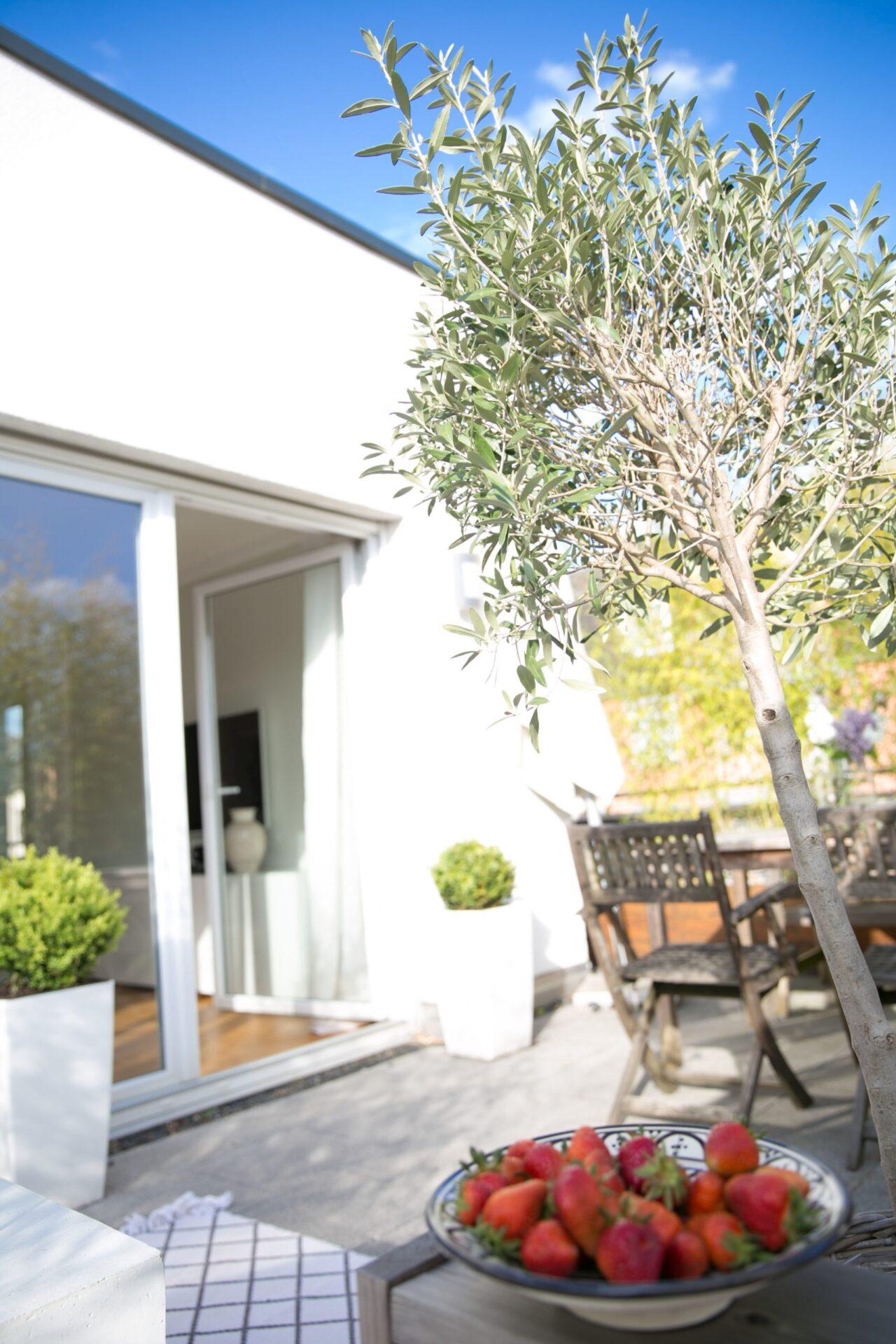 Olivenbaum auf der Terrasse