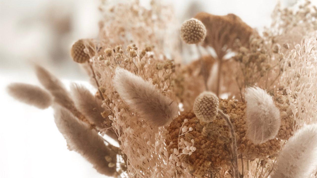 Details von Trockenblumen