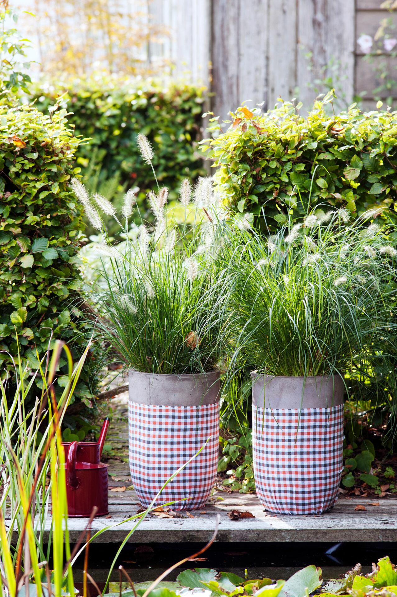 Gräser im Topf für die Terrasse