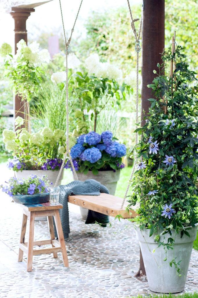 Schöne Blumen für die Terrasse