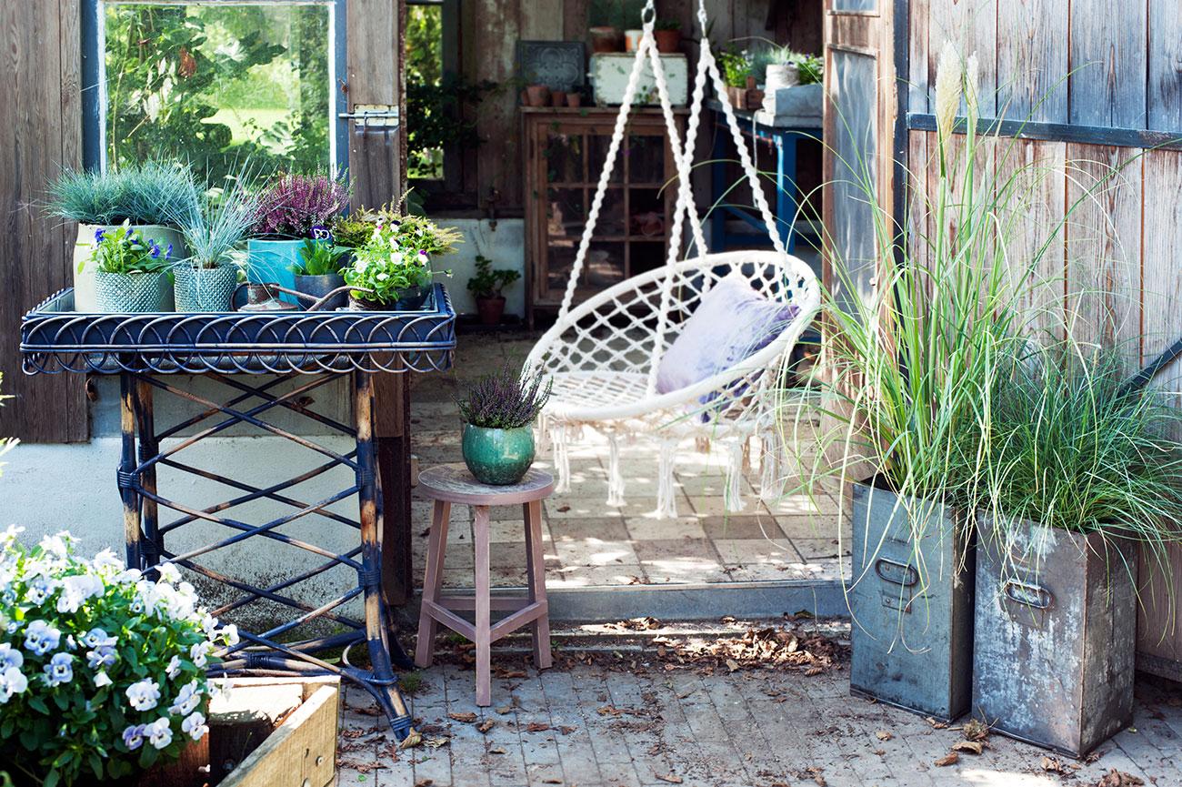 Gräser auf der Terrasse