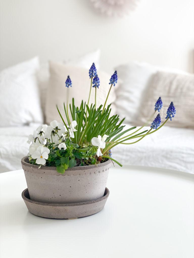 mit Frühlingsblumen dekorieren