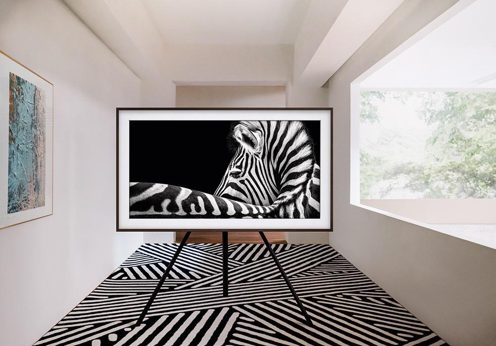 the frame - Zebra